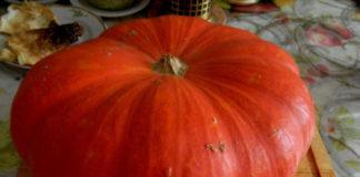 Рейтинг сорта тыквы Цукат