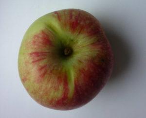 Как опылить яблоню Мелба