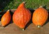 Рейтинг сорта тыквы Золотая груша