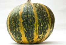 Рейтинг сорта тыквы Абрикосовая