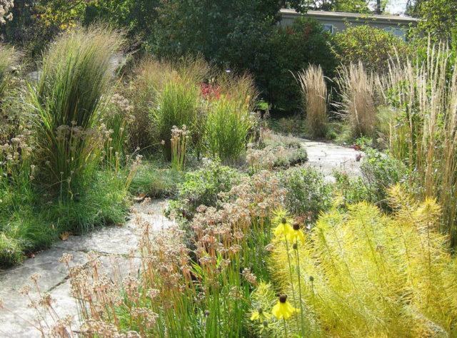 Фото амсонии в садовом ландшафте
