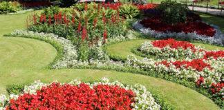 Агротехника выращивания бегонии в саду на даче