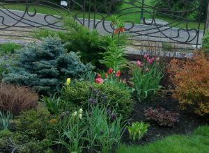 Фото рябчика в садовом ландшафте