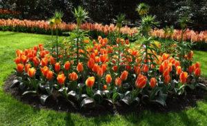 Фото цветов рябчиков в саду на даче