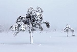 Правила зимовки яблони Соколовское