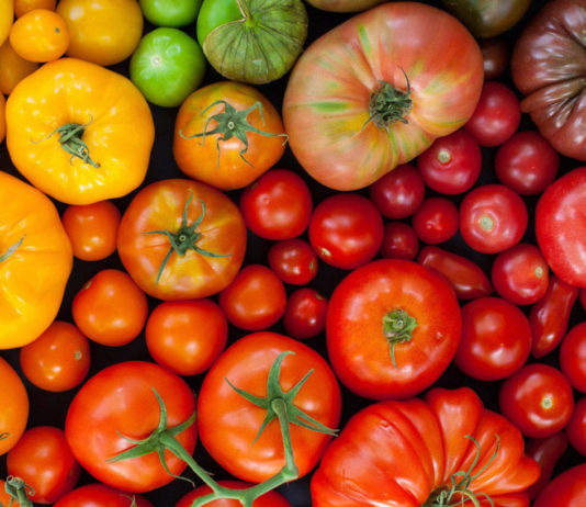 Рейтинг томатов для открытого грунта
