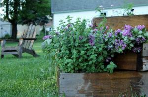 Фото яснотки в садовом дизайне